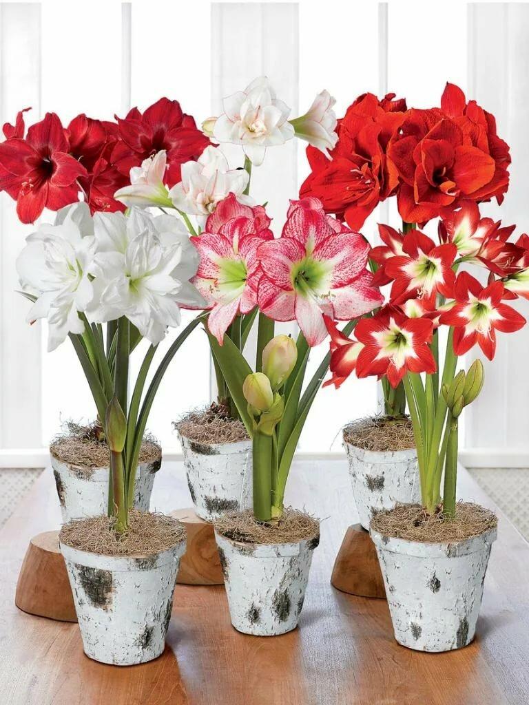 Цветы фото домашних цветов с названием