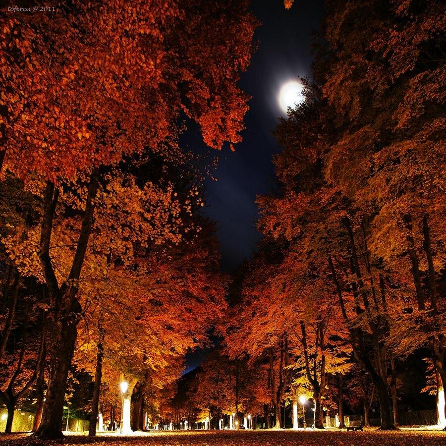 Открытки осень ночь, надписью