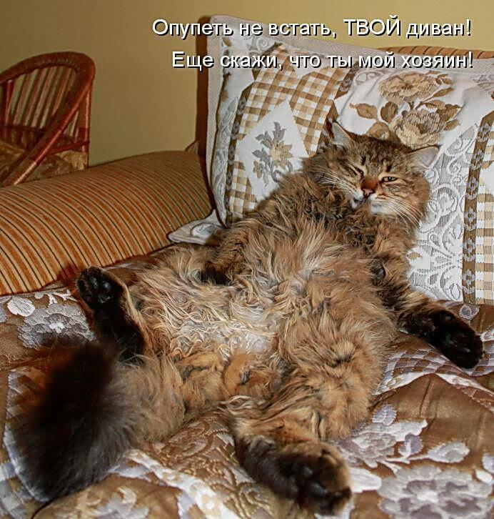 Смешные картинки с надписями и котами, самовара открыток красивые