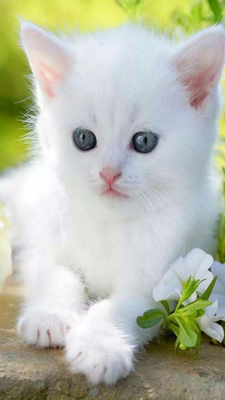 Картинки анимации котенок, прикол