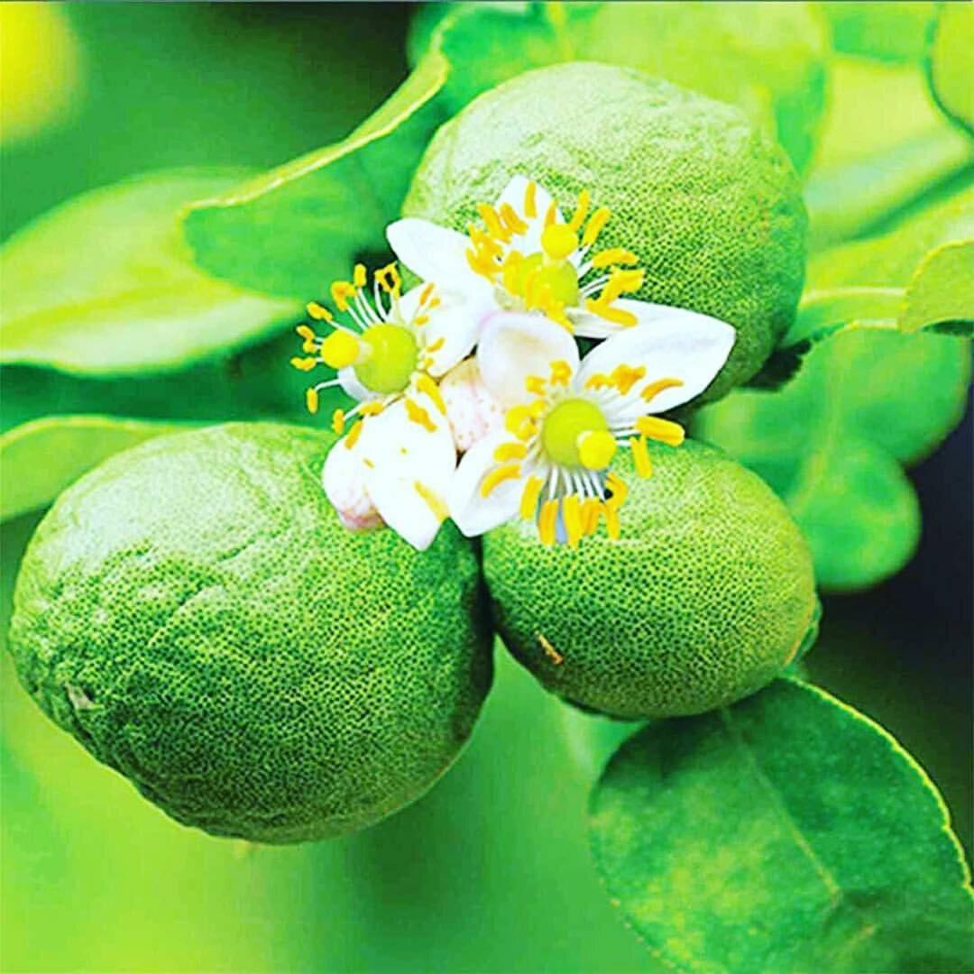 цветы бергамота картинки вообще получается