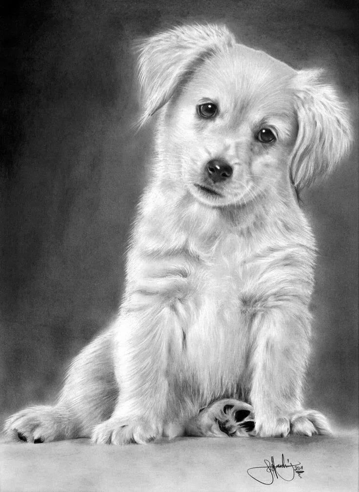 Картинки собачки простым карандашом