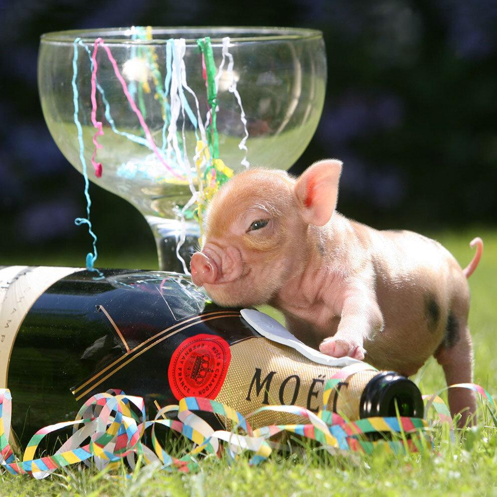 Картинки надписями, картинка прикол год свиньи