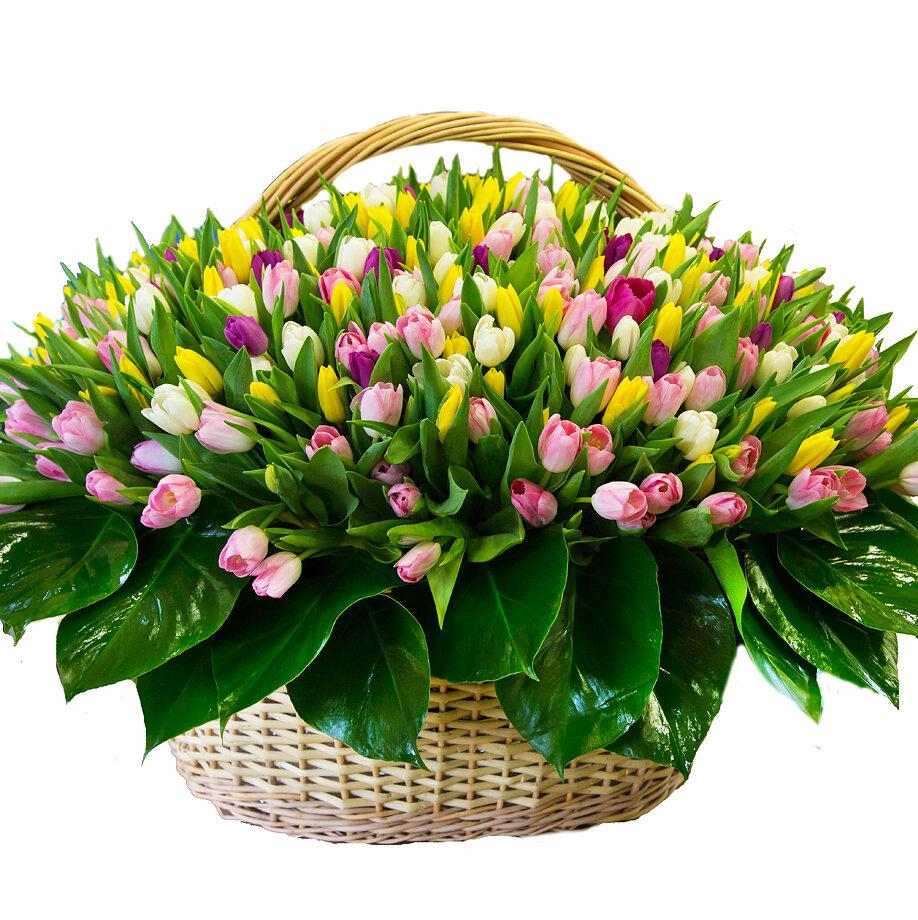 С днем рождения букеты тюльпанов