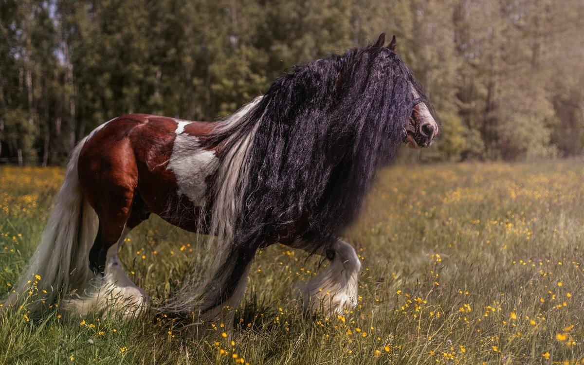 музыку картинки с разными лошадьми довелось побывать славном