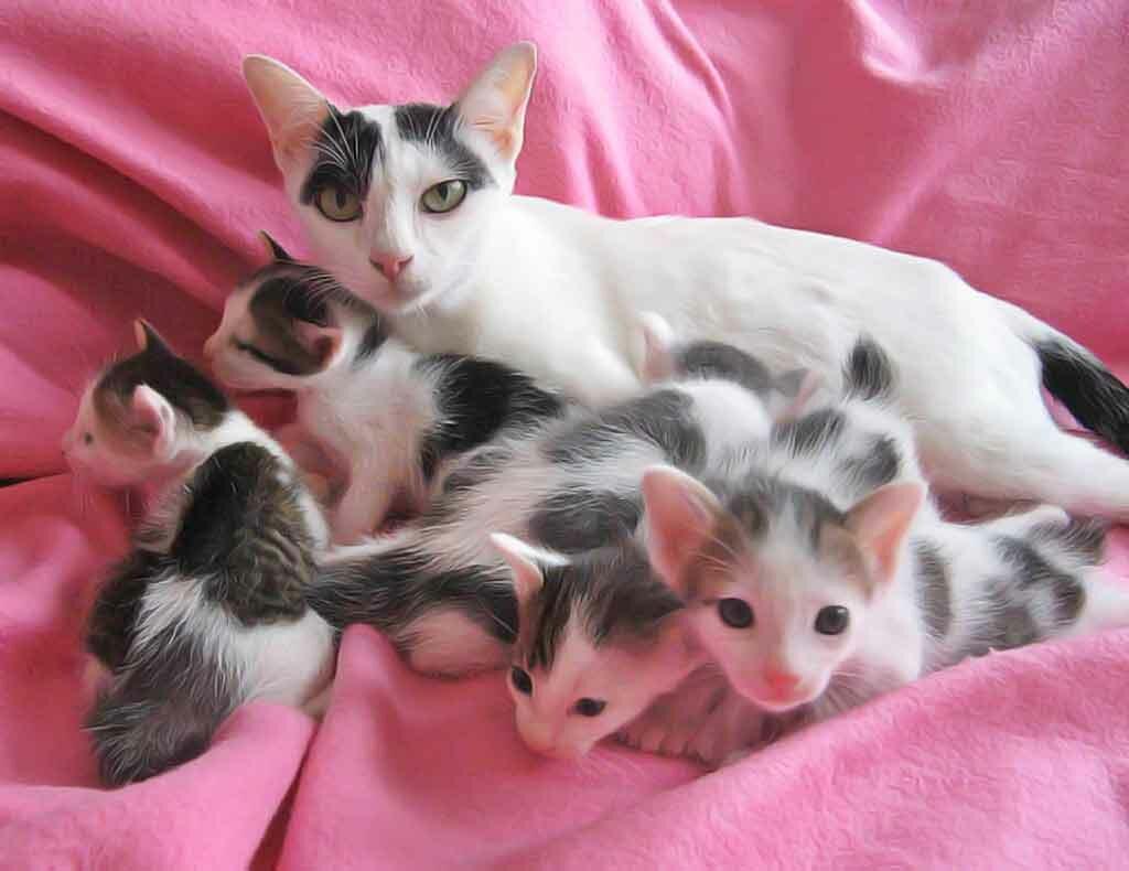 картинки какие котята бывают фото какой-то известной
