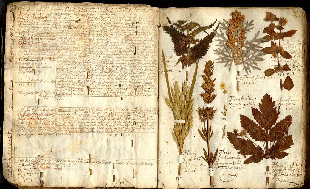 Старинные гербарии картинки