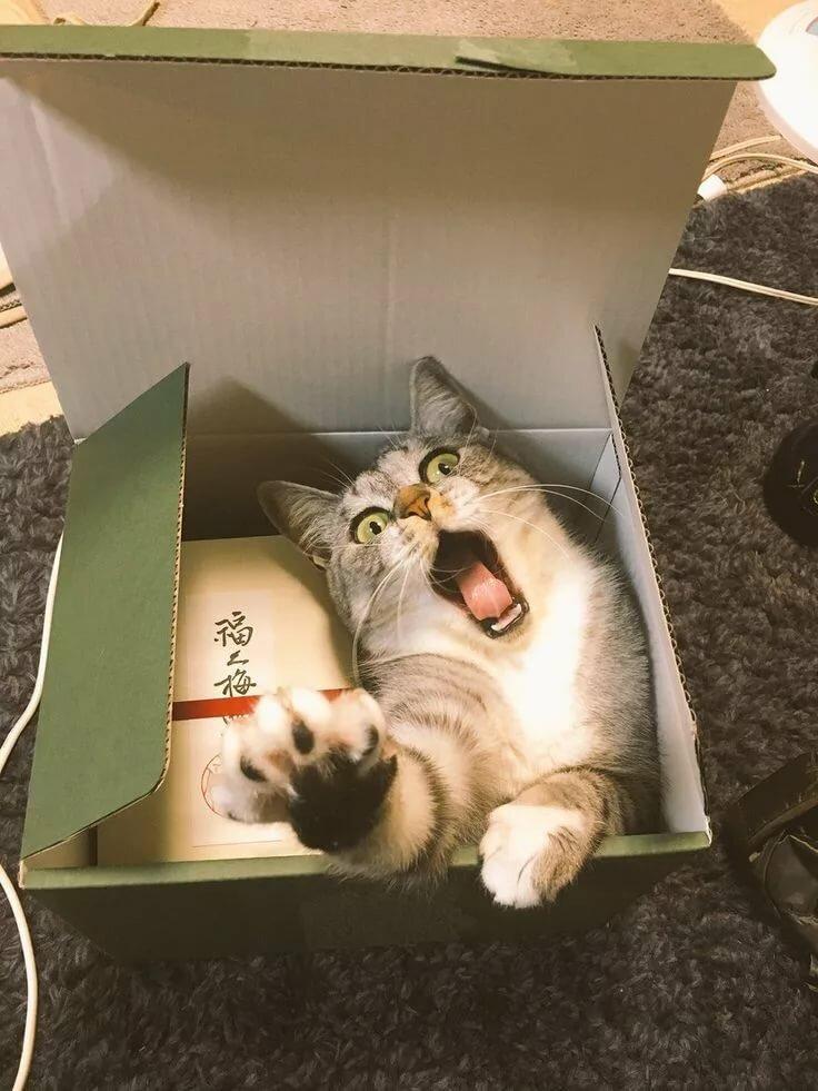 кот в коробке картинки анну