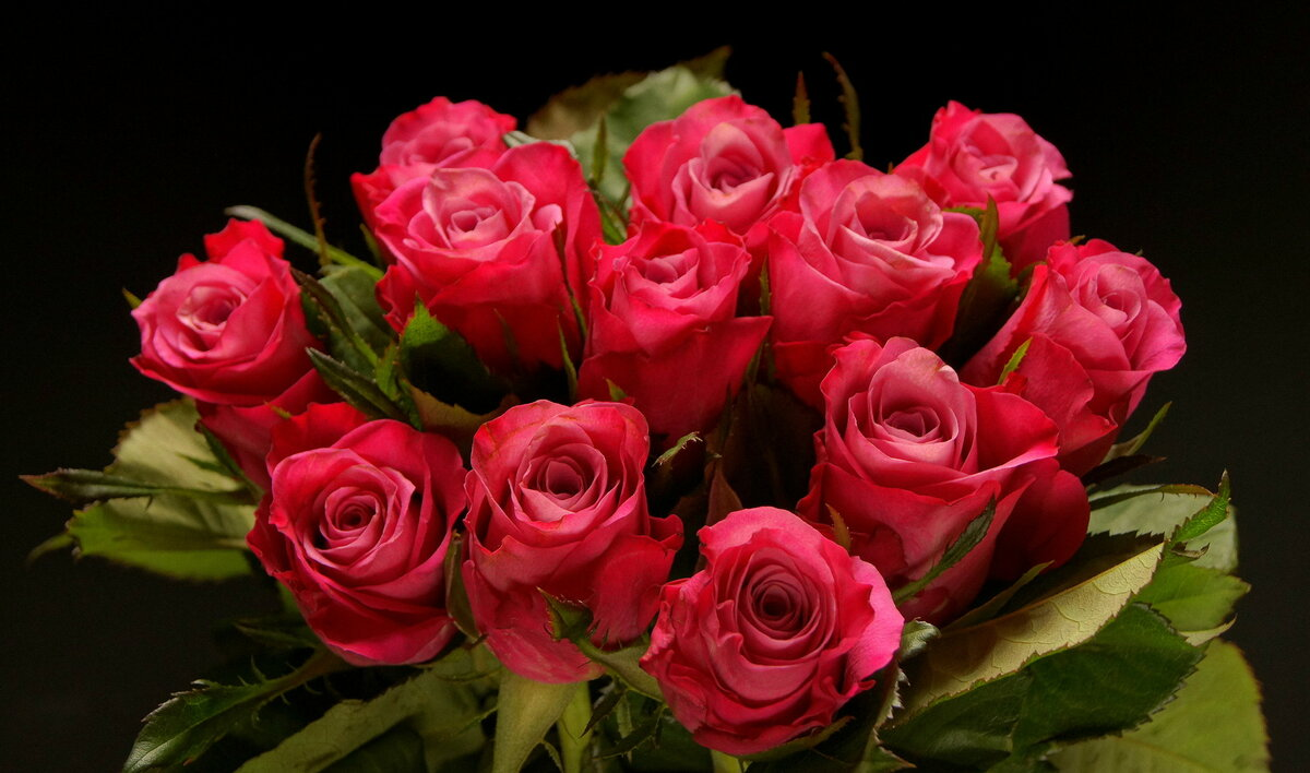 Открытка фото, фото музыкальных открыток или обложек красивые розы