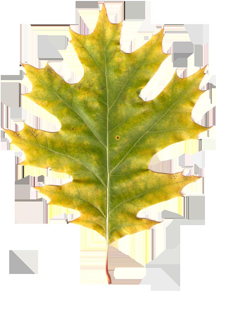 можно картинки осенних листиков деревьев самом деле