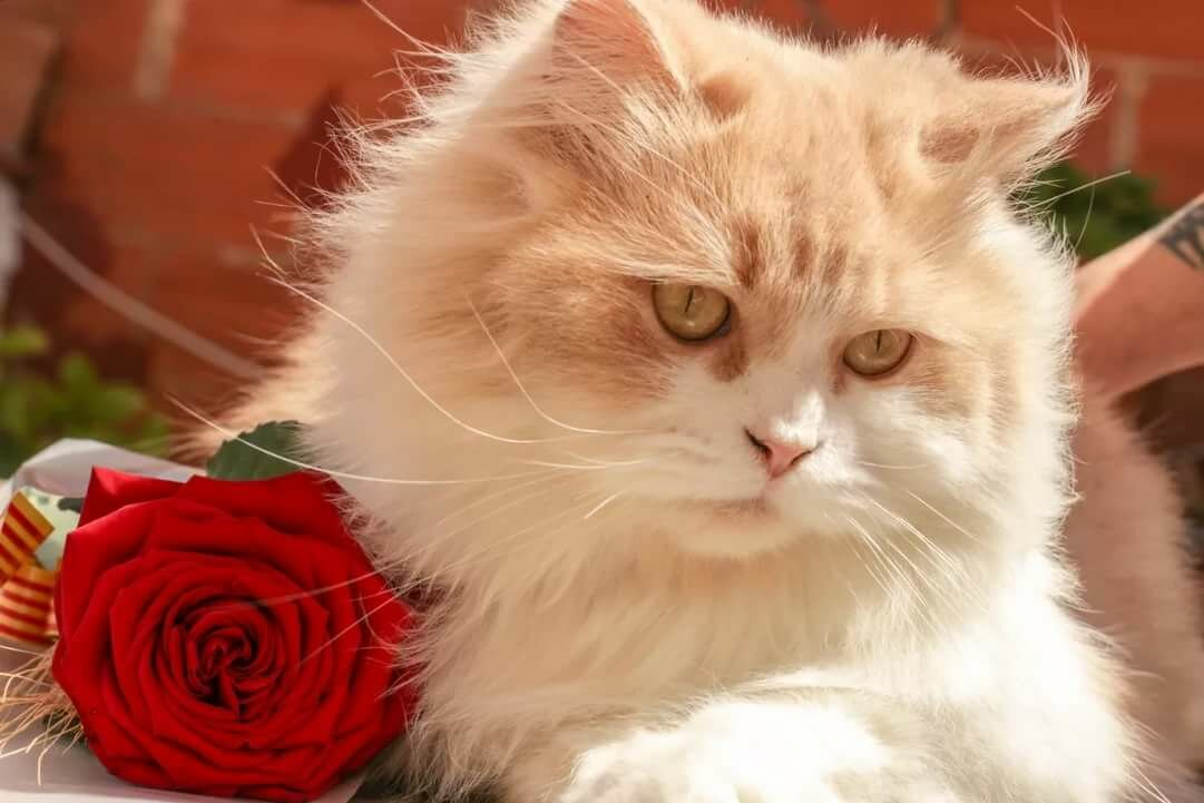 Котята фото открытки