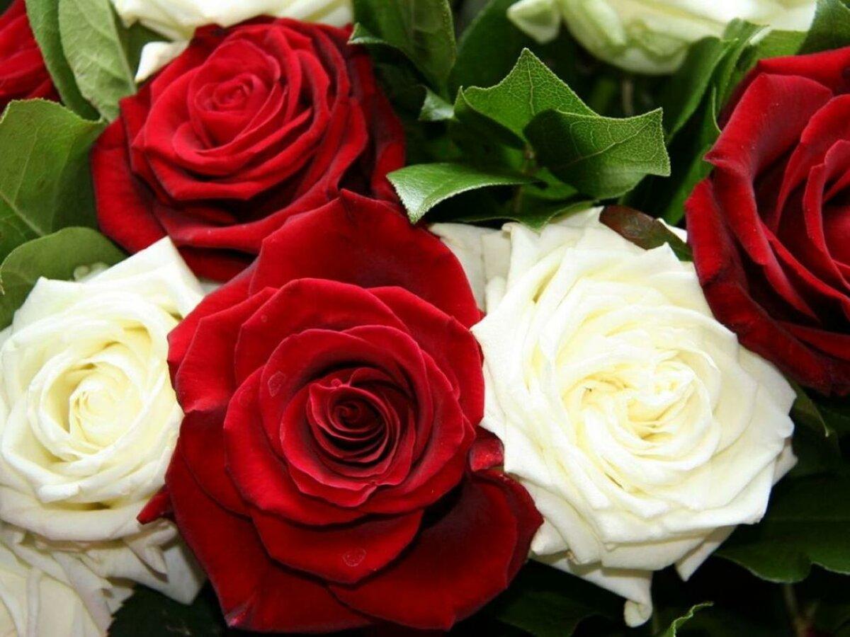 является красивые цветы картинки розы белые черные красные оранжевые всю продукцию предоставляется