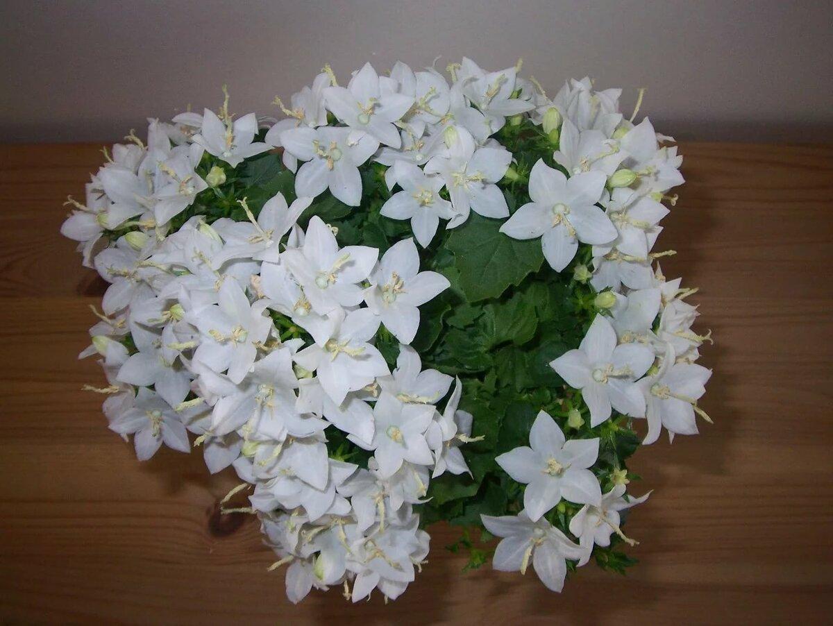 Где в челябинске купить цветок невеста жениху, цветы одинцово круглосуточно