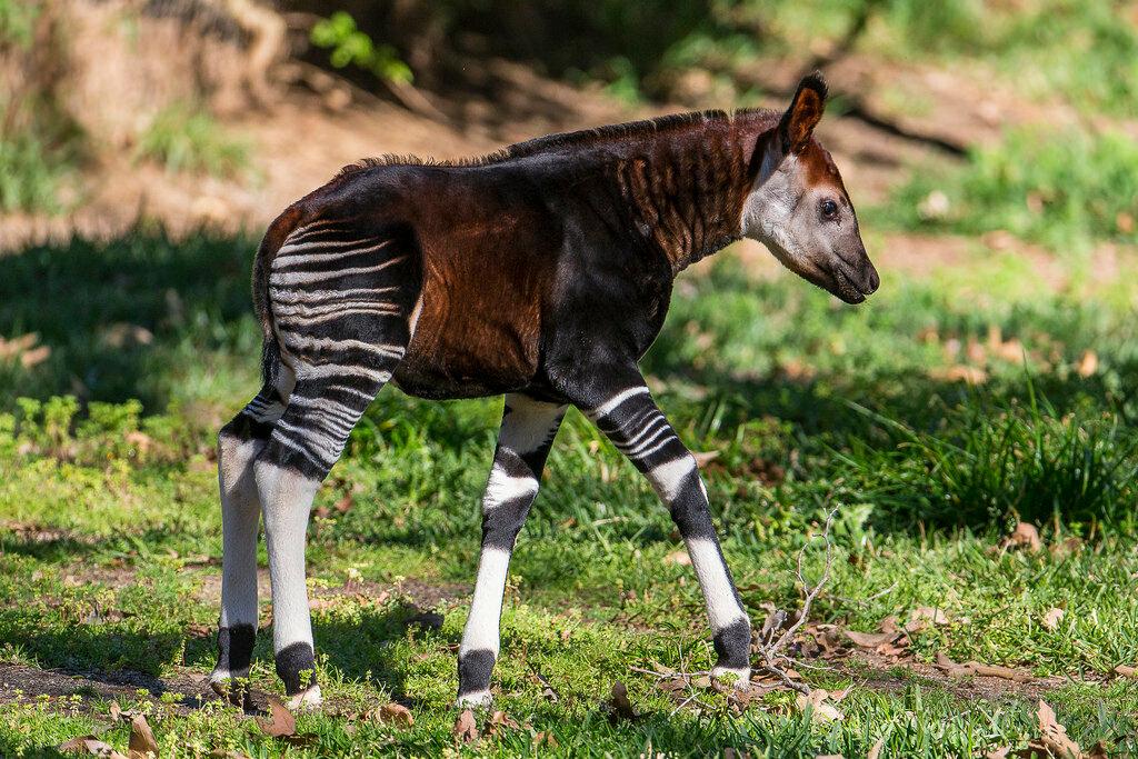 самые необычные животные мира фото и названия это популярное напольное