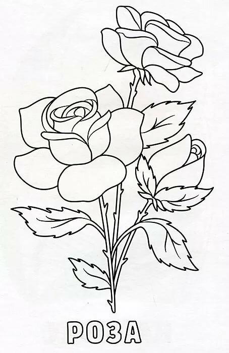 раскраска цветы с названиями