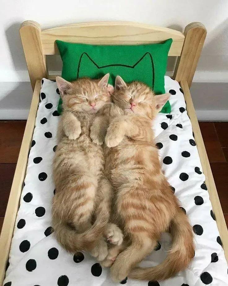 Картинки спи смешные