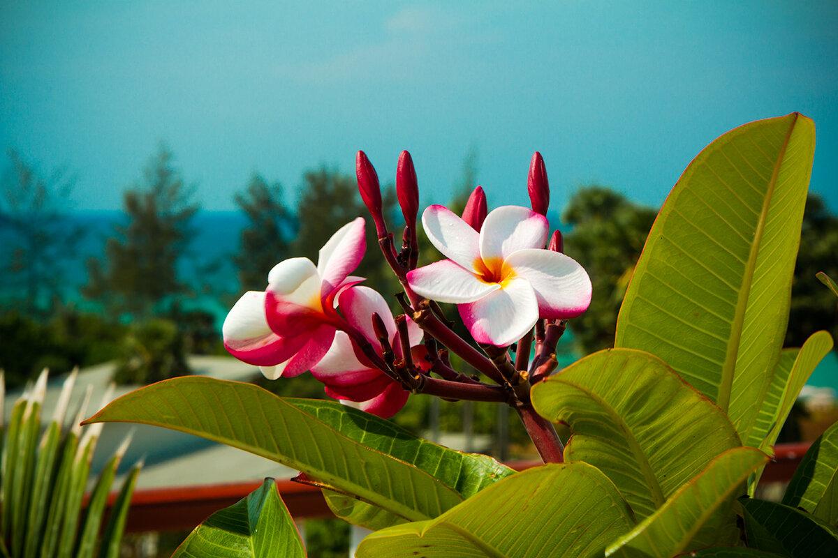 экзотические цветы картинки с названиями список