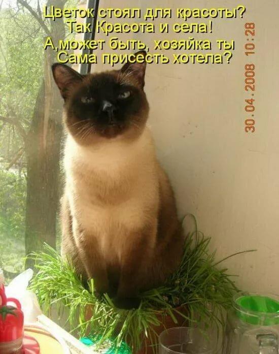 Надписью, коты картинки фото с надписями