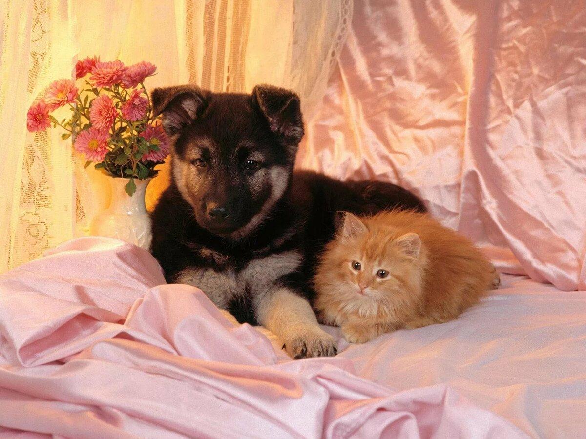 Картинки котята милые и щенят