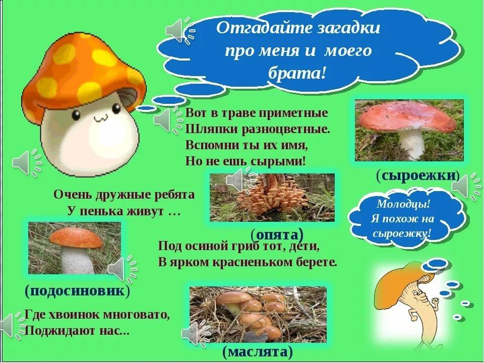 прорезного грибы загадки с картинками и ответами реакция