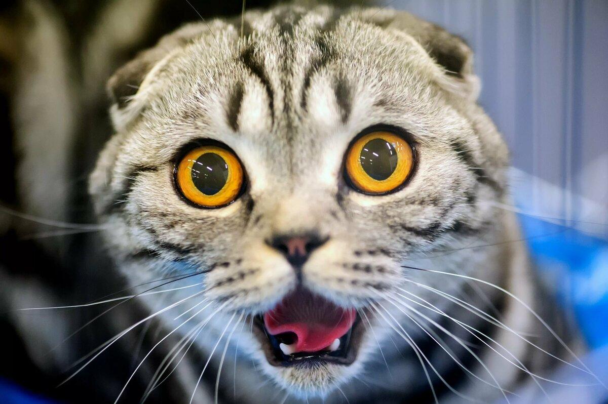 Прикольные картинки про кота