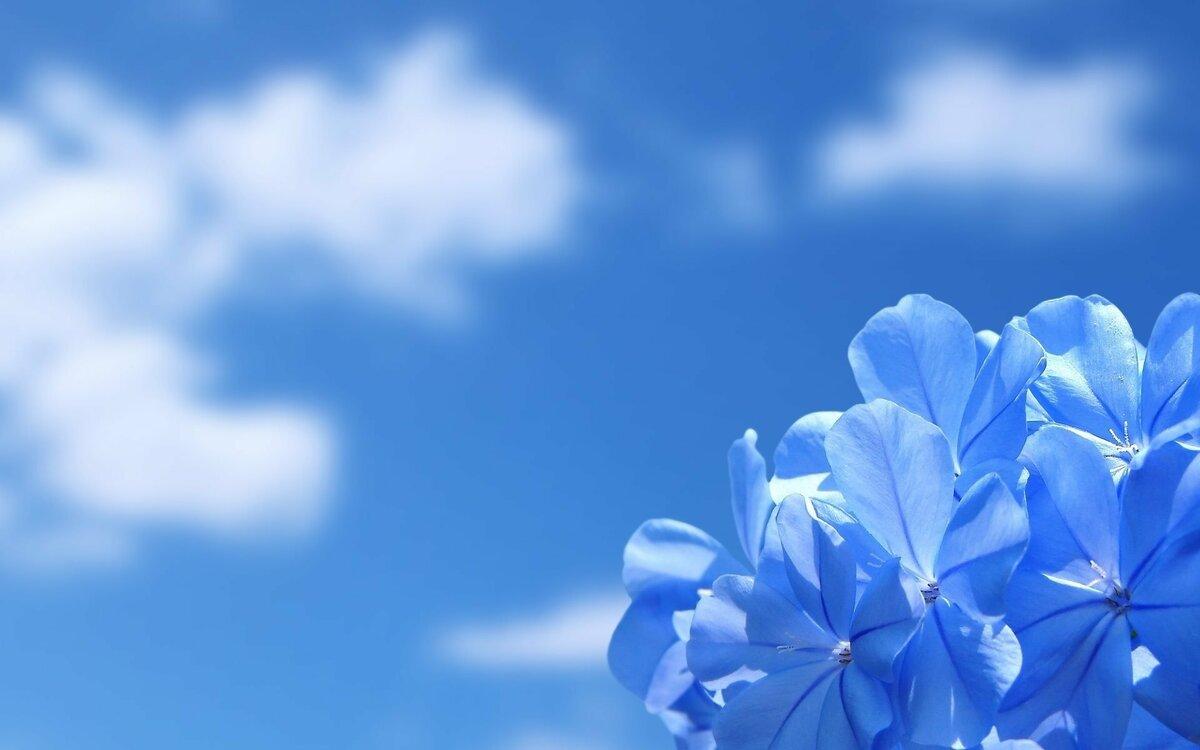 Фон для открытки голубое небо, для