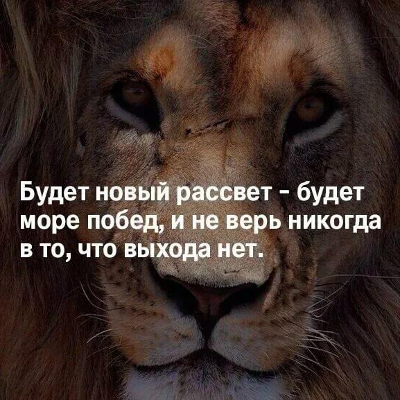Блестящие анимированные, прикольные картинки львов с надписями со смыслом