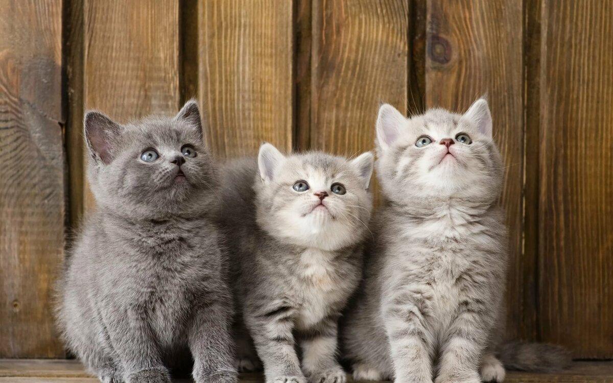 Красивые картинки с кошками на рабочий стол