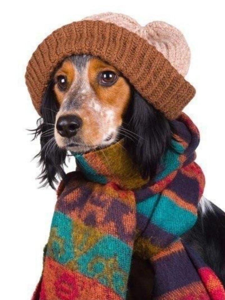 Животные с шарфиком и градусником фото