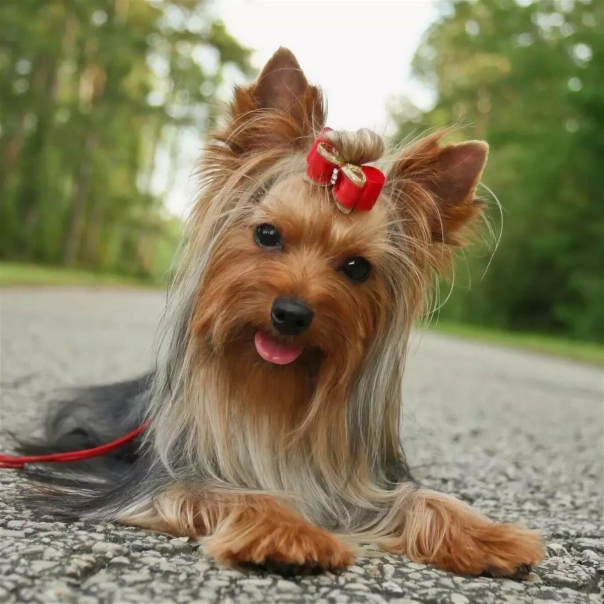 картинки собак ерки