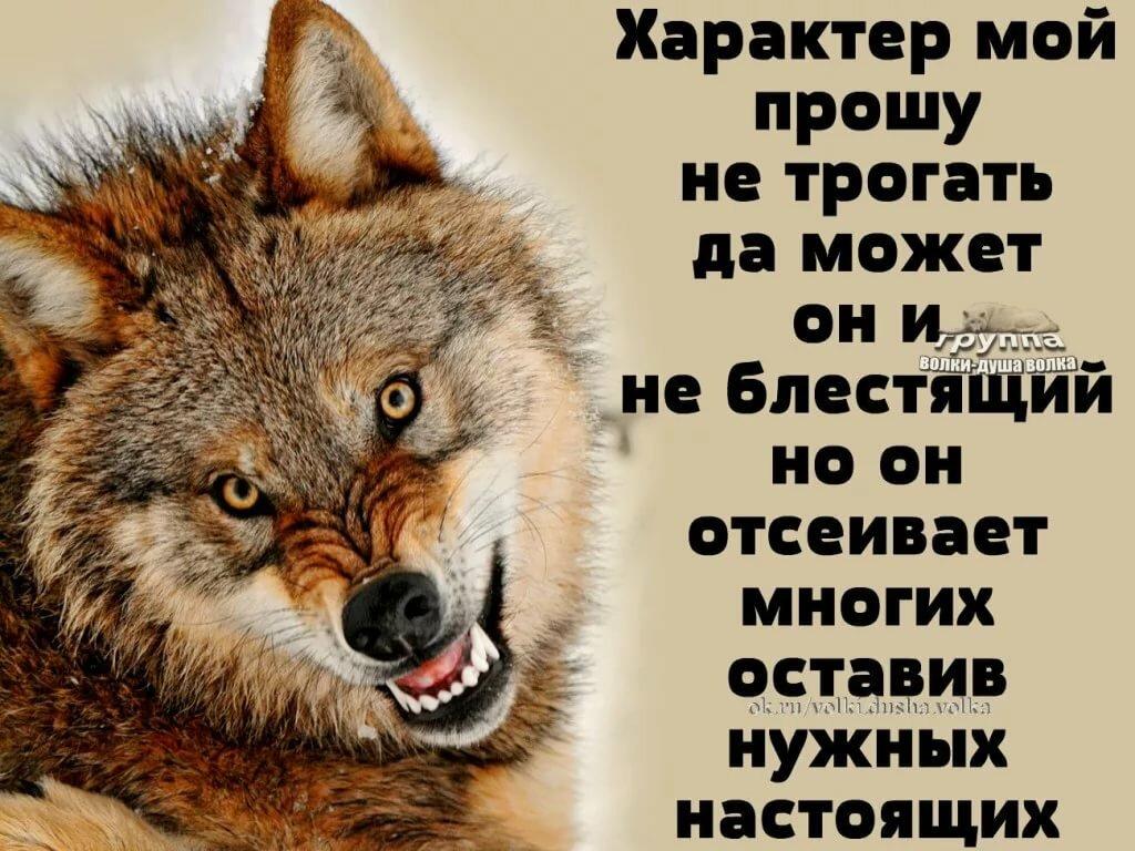 волк картинка с цитатами