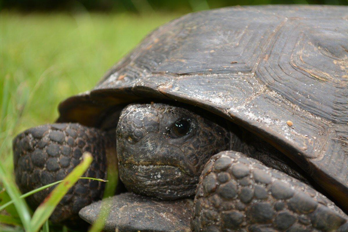 Картинка черепахи в природе
