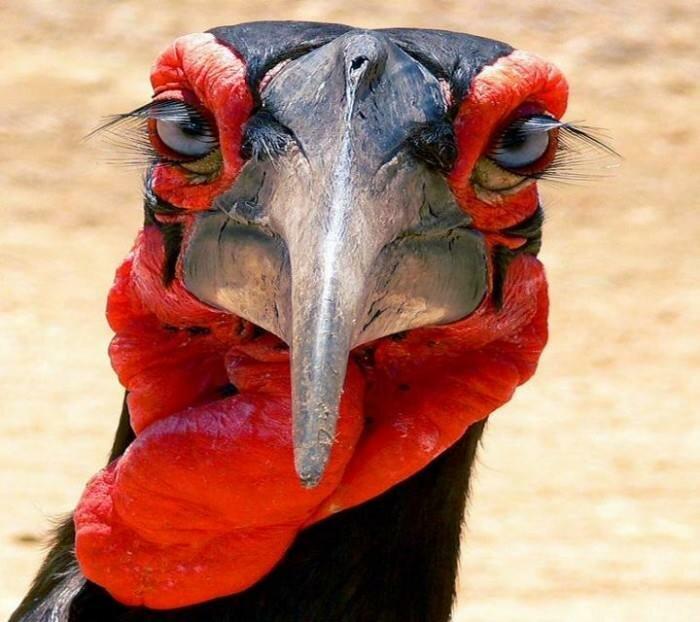 прикольное фото птички мозгоклюйки прилично