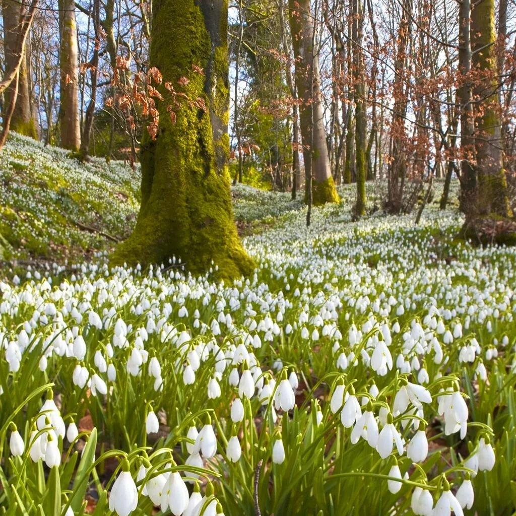 картинка середина весны добиться признания мире