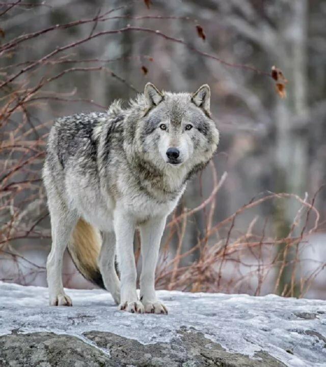 понимаю, добрый волк фото жили двухместном номере