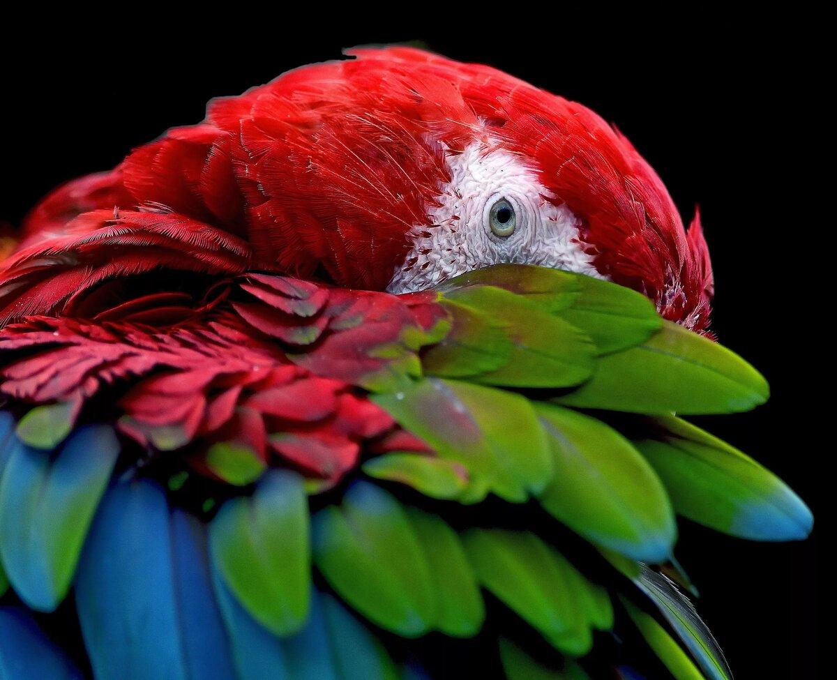 Картинки попугай на цветке