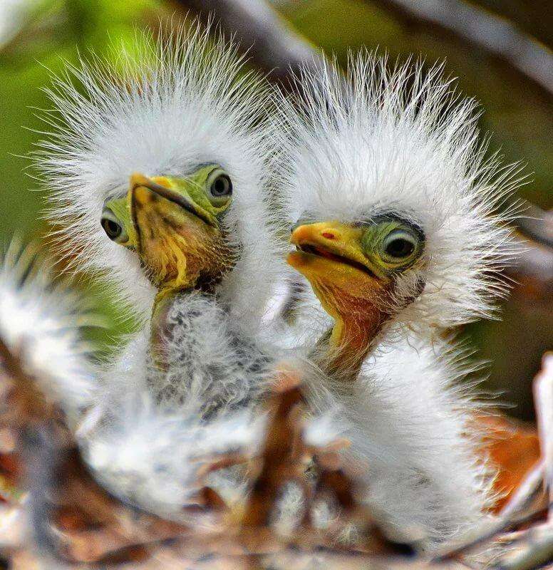 Прикольные птицы в картинках, картинки красивые открытки