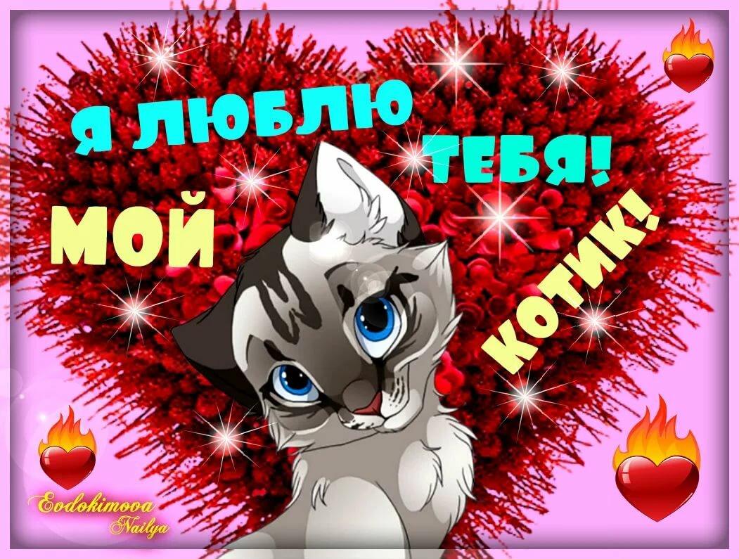 Пачками картинки, открытка мой любимый котик