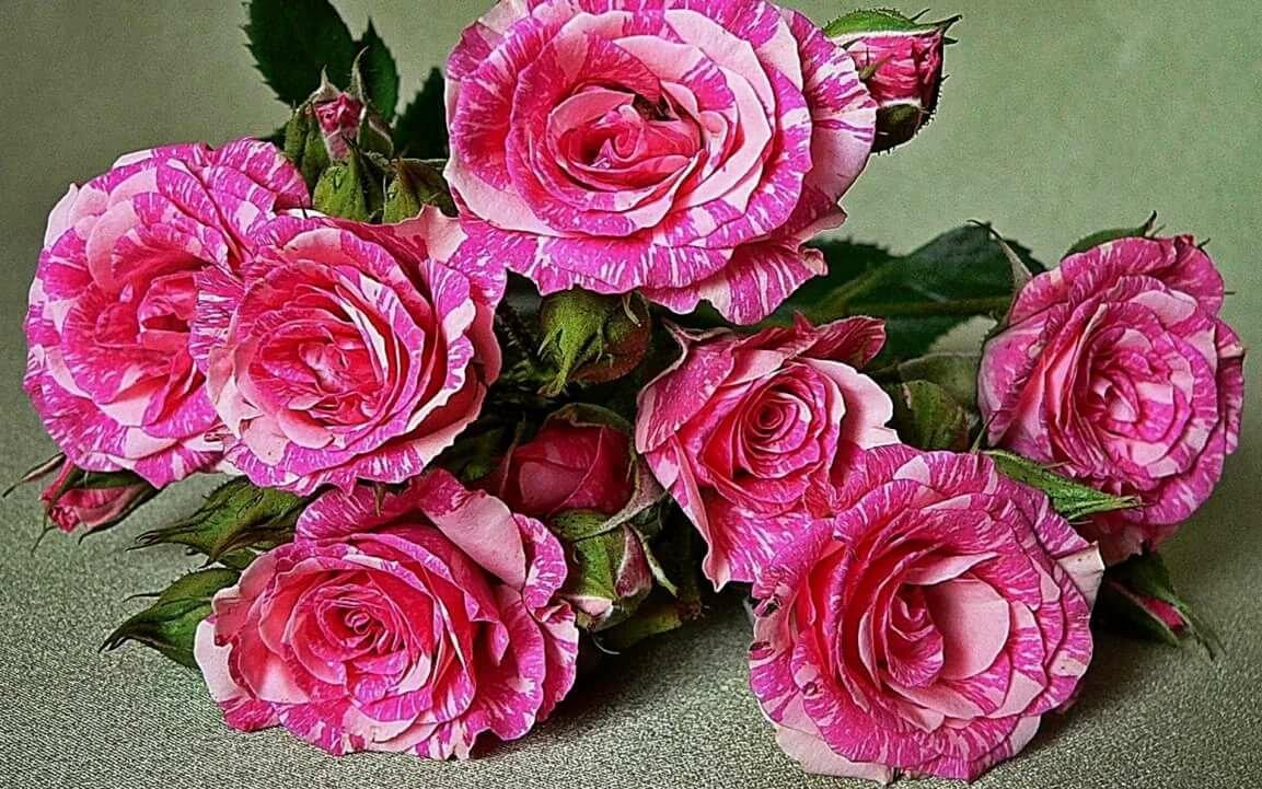 Красивые роз открытки, открытку февраля другу