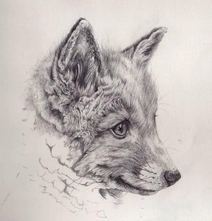Картинка лисички карандашом