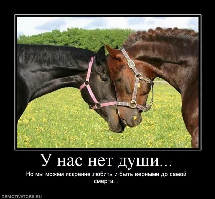было стихи про конный спорт до слез подобрали