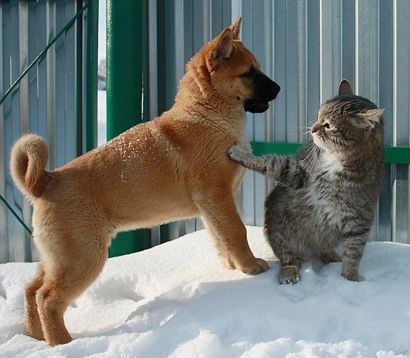 Смешные фото животных с подписями новые очень смешные, назвать открытку