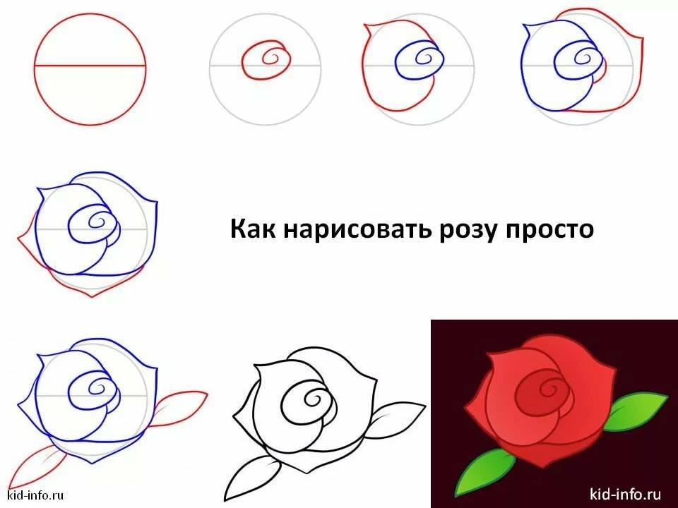 Картинки схема рисования роз