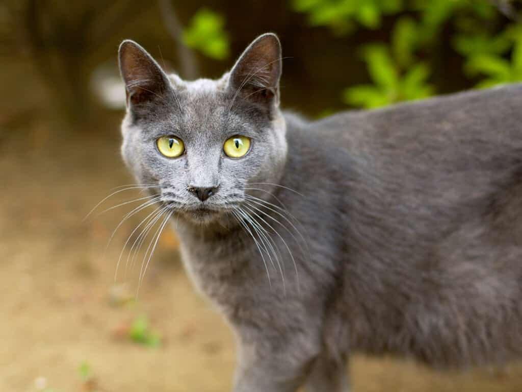 такие стены фото серой кошки с желтыми глазами сериал