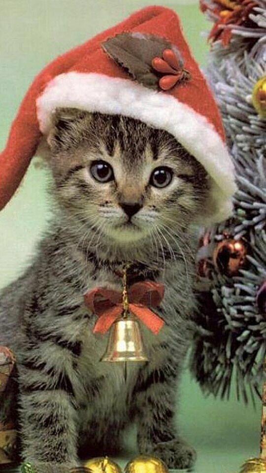 Прикольные открытки год кота, фон компьютер