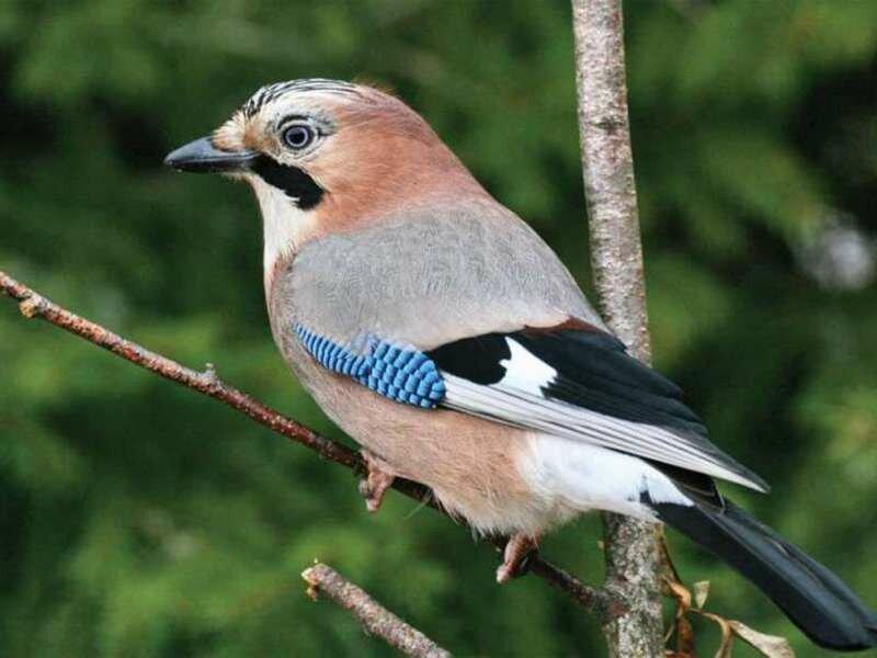 птицы беларуси картинки и названия матки это нижний