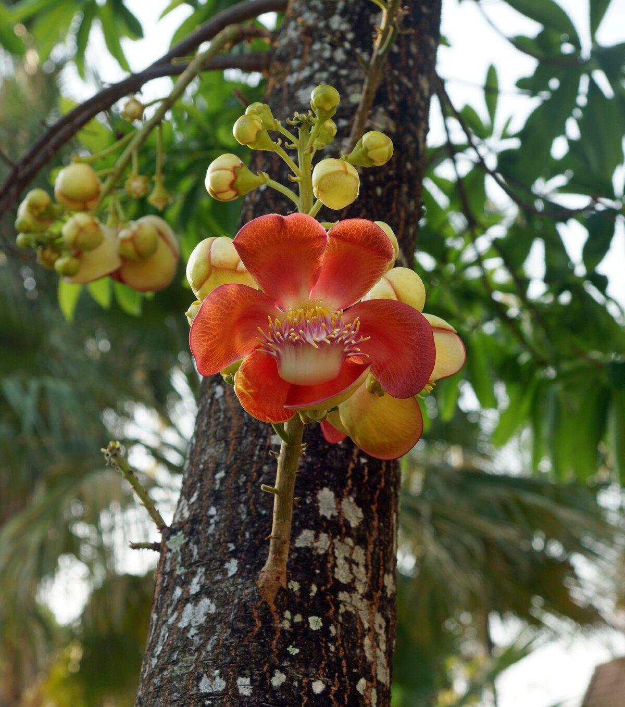 растения тайланда фото и названия ближайшем видео