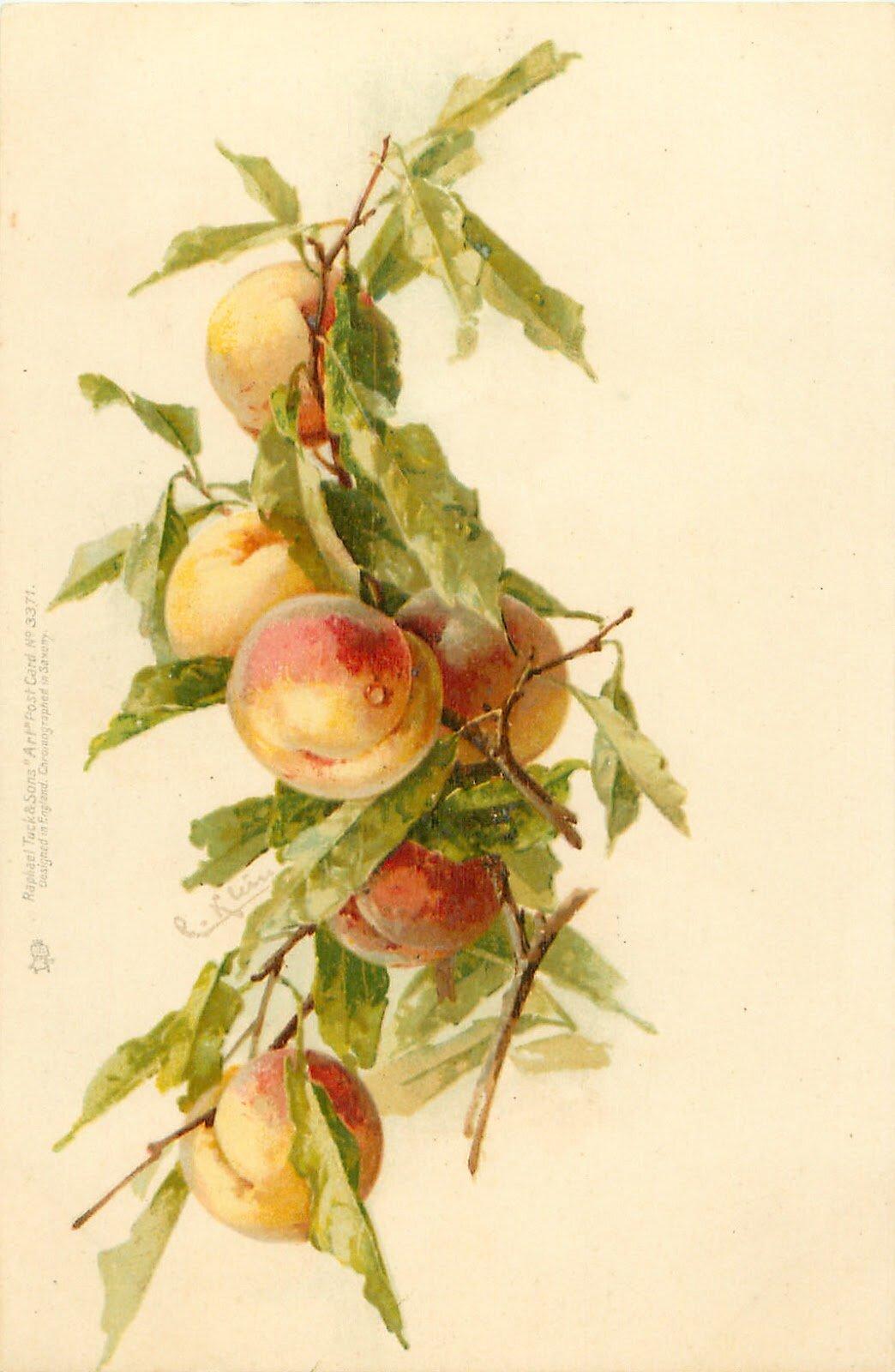 Старинные открытки яблоки и цветы