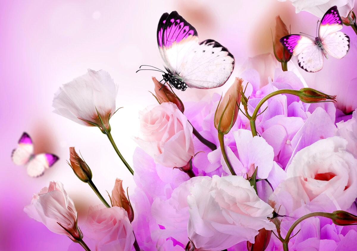 Цветы и бабочки картинки, маленькие