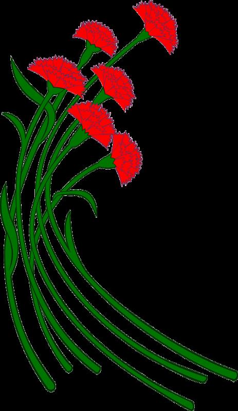 мой картинки цветы на белом фоне анимации 23 февраля стоимость поездки